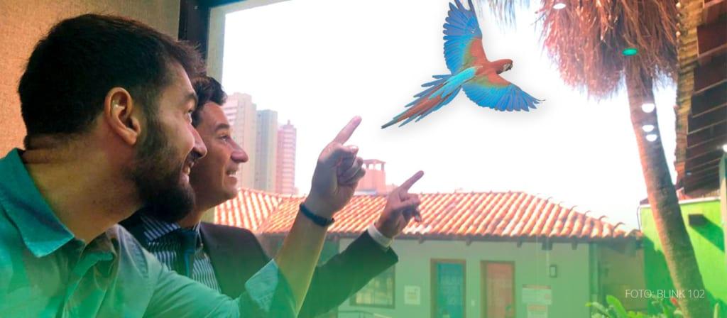 PODCAST: Quantos pássaros você já viu hoje?