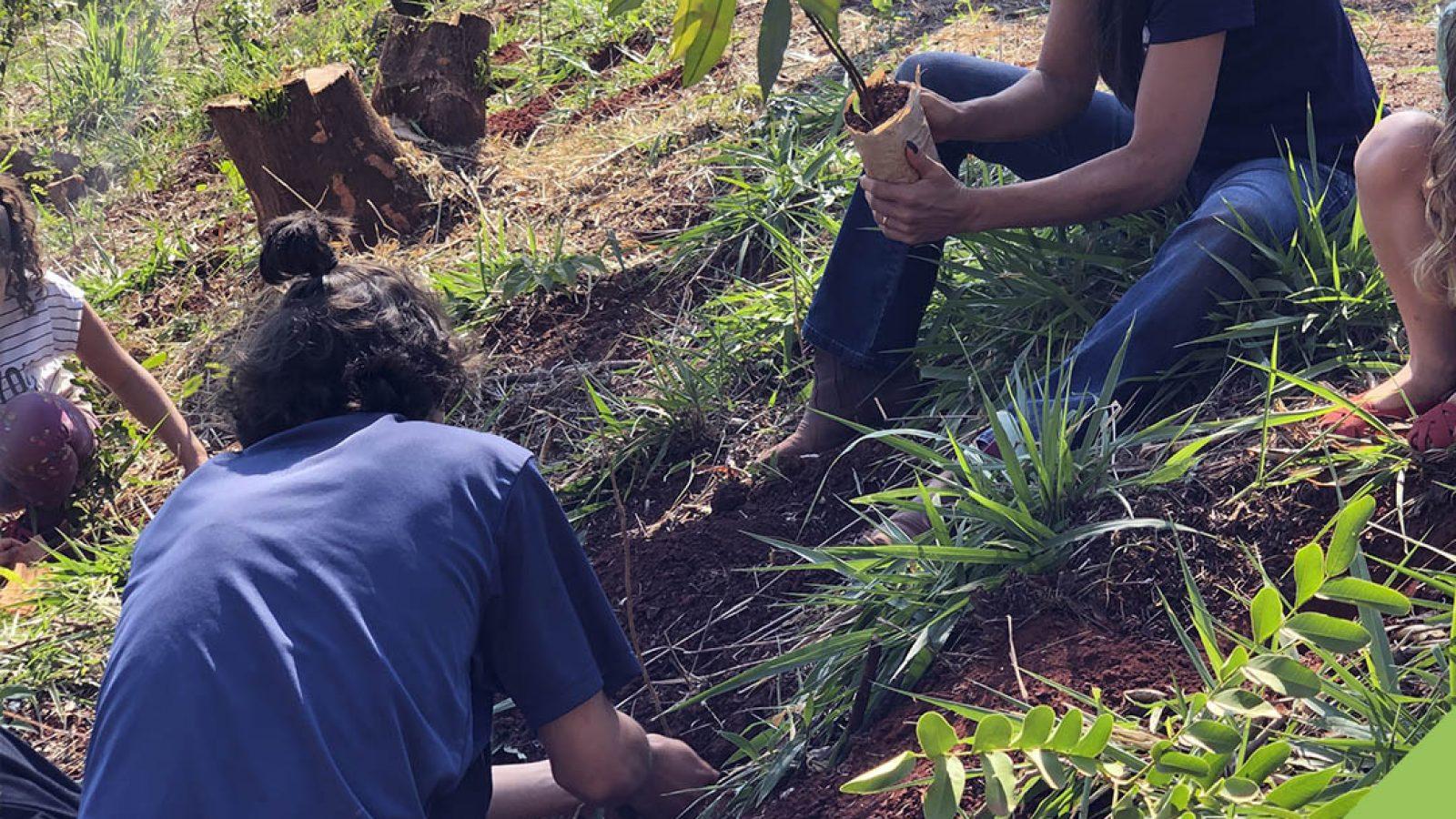 2706 árvores plantadas