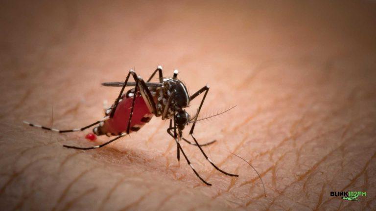 Cientista descobriram como erradicar a dengue
