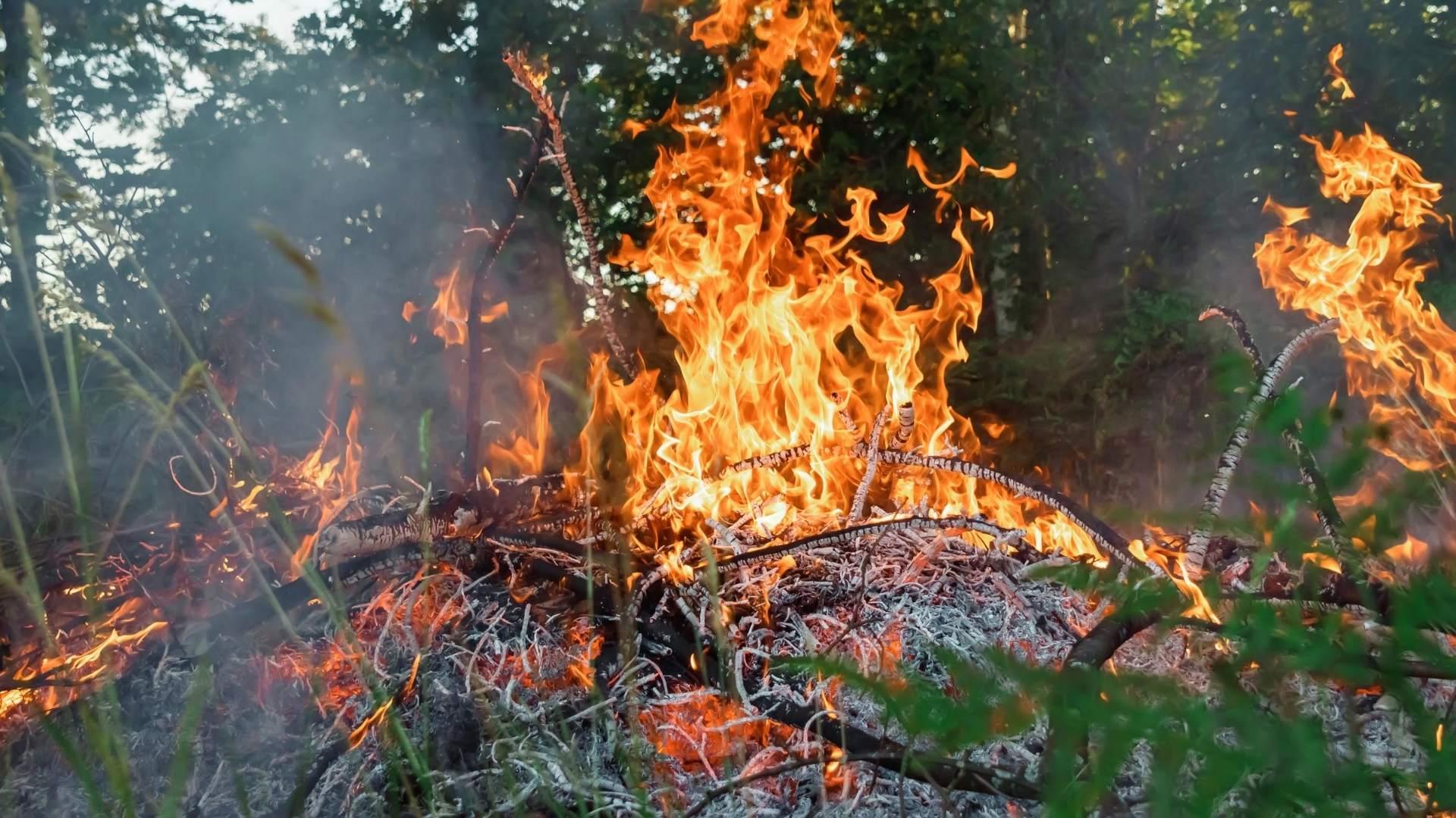 Enquanto as florestas queimam, a economia brasileira perde bilhões