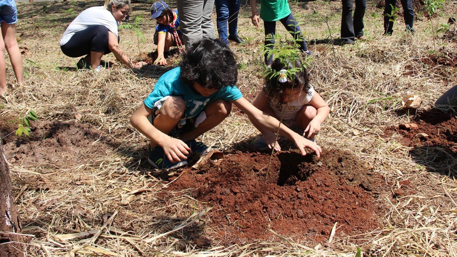 Por que Campo Grande precisa plantar cada vez mais árvores?