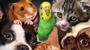 Qual a realidade dos animais em época de Covid-19?