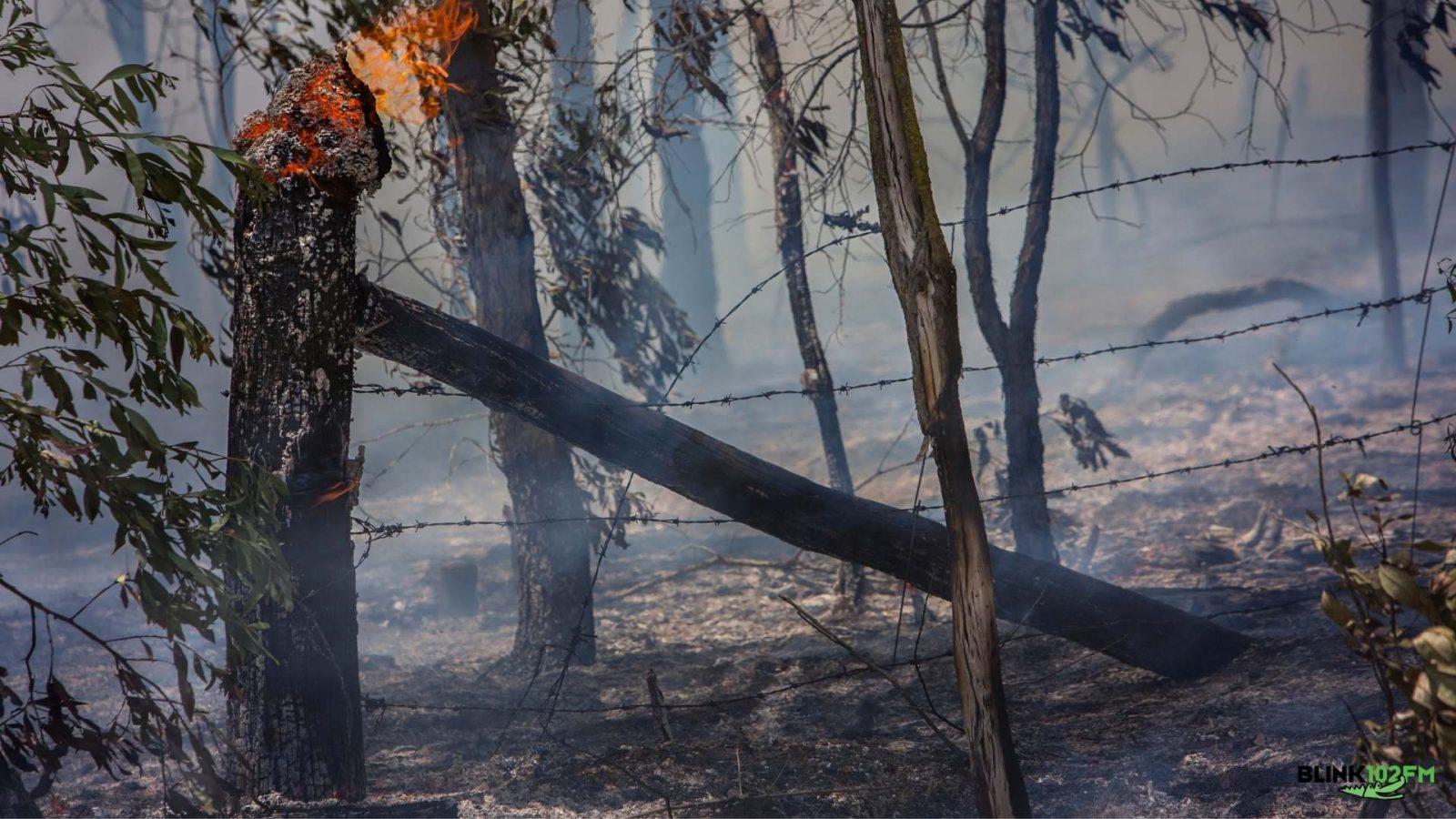 #somostodospantanal: fogo está matando as espécies pantaneiras
